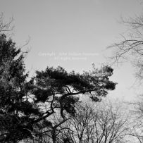 Majestic Trees 1 © Stefanie Neumann - All Rights Reserved.
