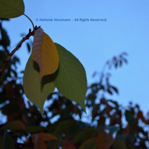 Evening Walk in Autumn 4 © Stefanie Neumann - All Rights Reserved.